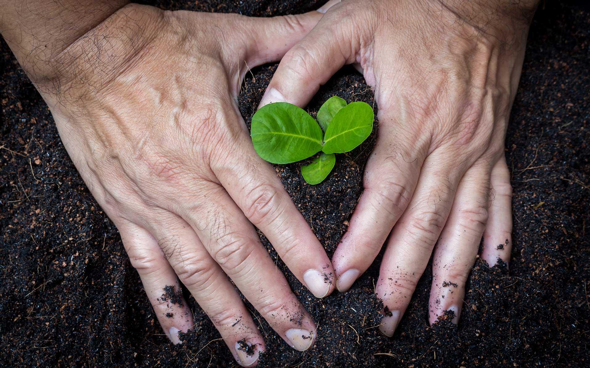 tuingezel-hart-handen